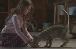 Реклама Whiskas — Кошки домоседы (2020)